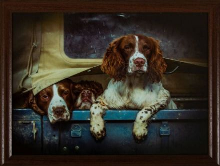 Spaniels in Landy Lap Tray